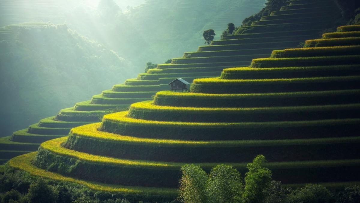 Las terrazas de arrozales en Bali.