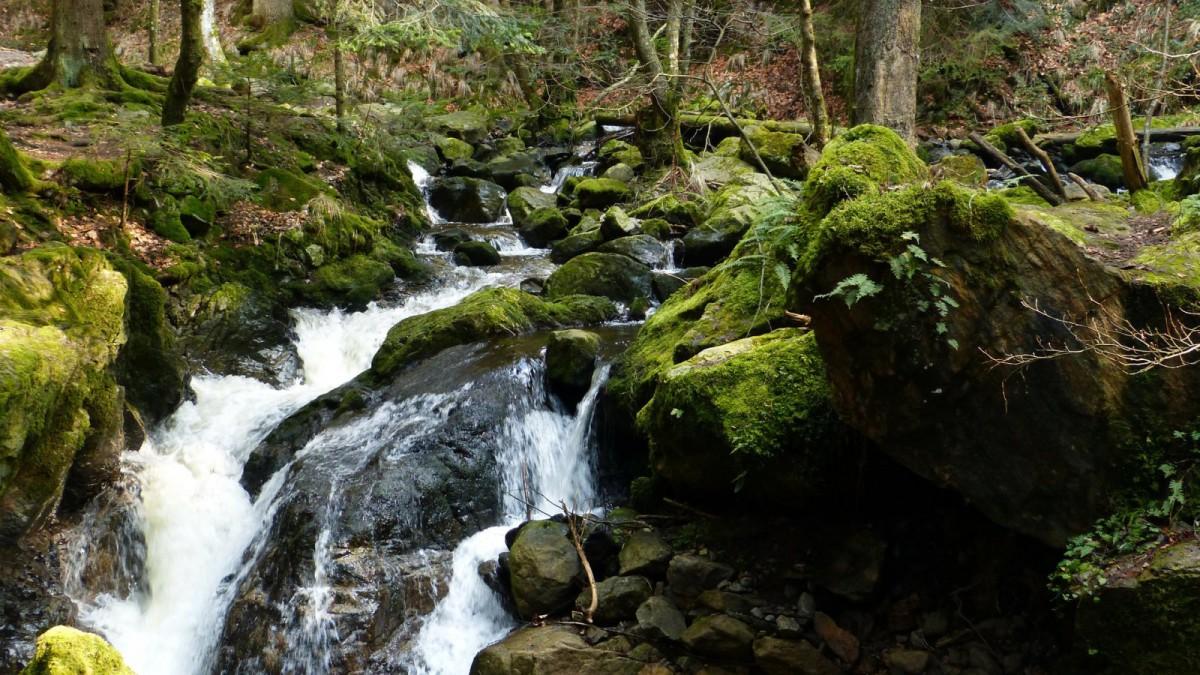 Río en la Selva Negra alemana.