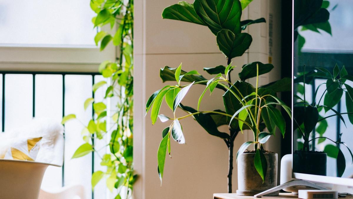 Hay plantas de interior que ayudan a mantener el aire más limpio.