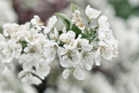 Existen muchos tipos de flores de color blanco, ideales para ceremonias.