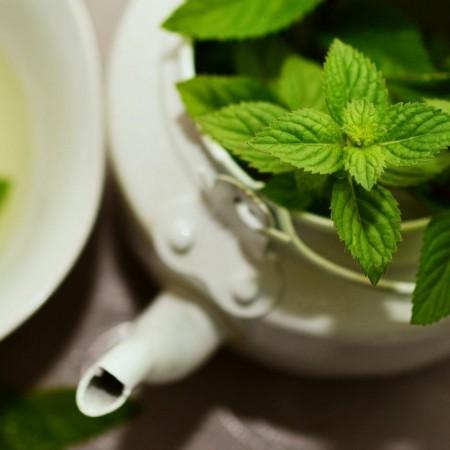 Tradicionalmente se ha utilizado como planta medicinal por sus propiedades saludables.