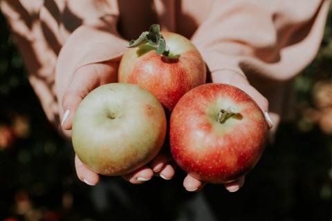 Las manzanas son frutas llenas de agua y nutrientes.
