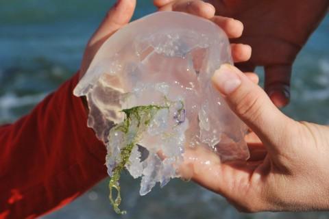 Está creciendo la presencia de medusas en nuestras playas.
