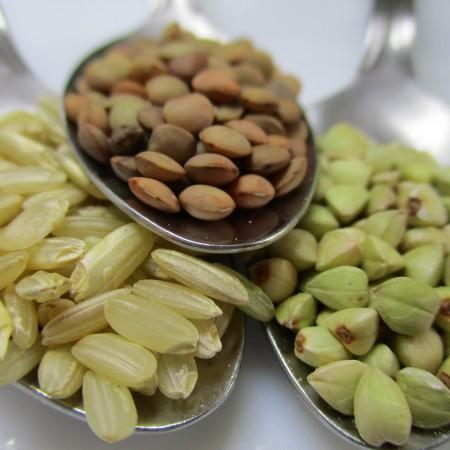 Alimentos ricos en proteína y en aminoácidos esenciales