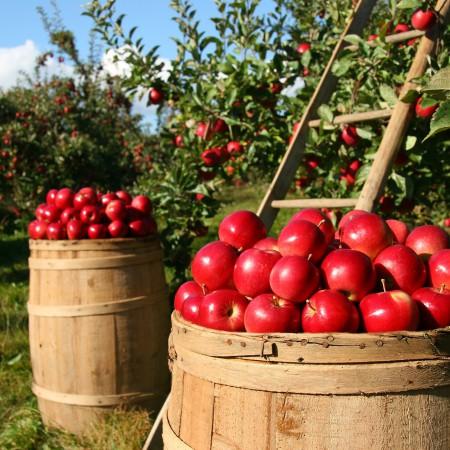 Los 5 beneficios de comprar alimentos ecológicos