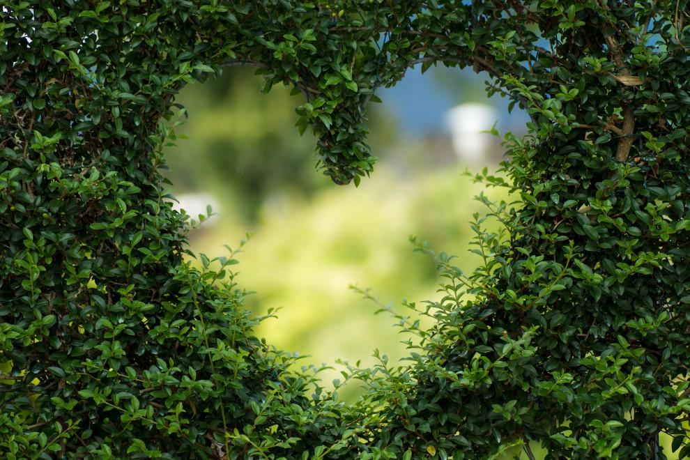 12 consejos para cuidar tu corazón y que esté sano
