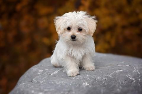 Las 15 razas de perro más populares
