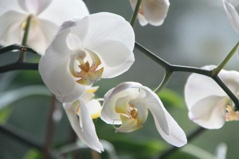 ¿Cómo cuidar una orquídea? 8 trucos y consejos