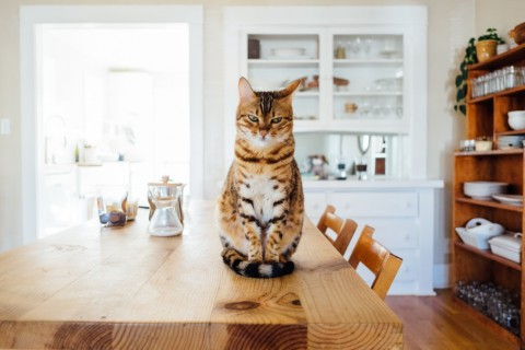 Mejores mascotas hogar con niños