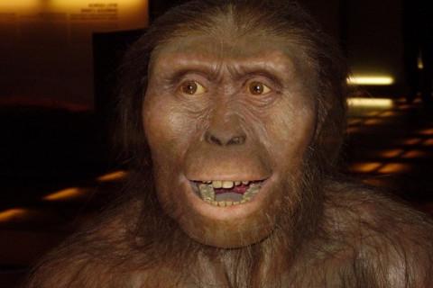 Lucy la Australopithecus