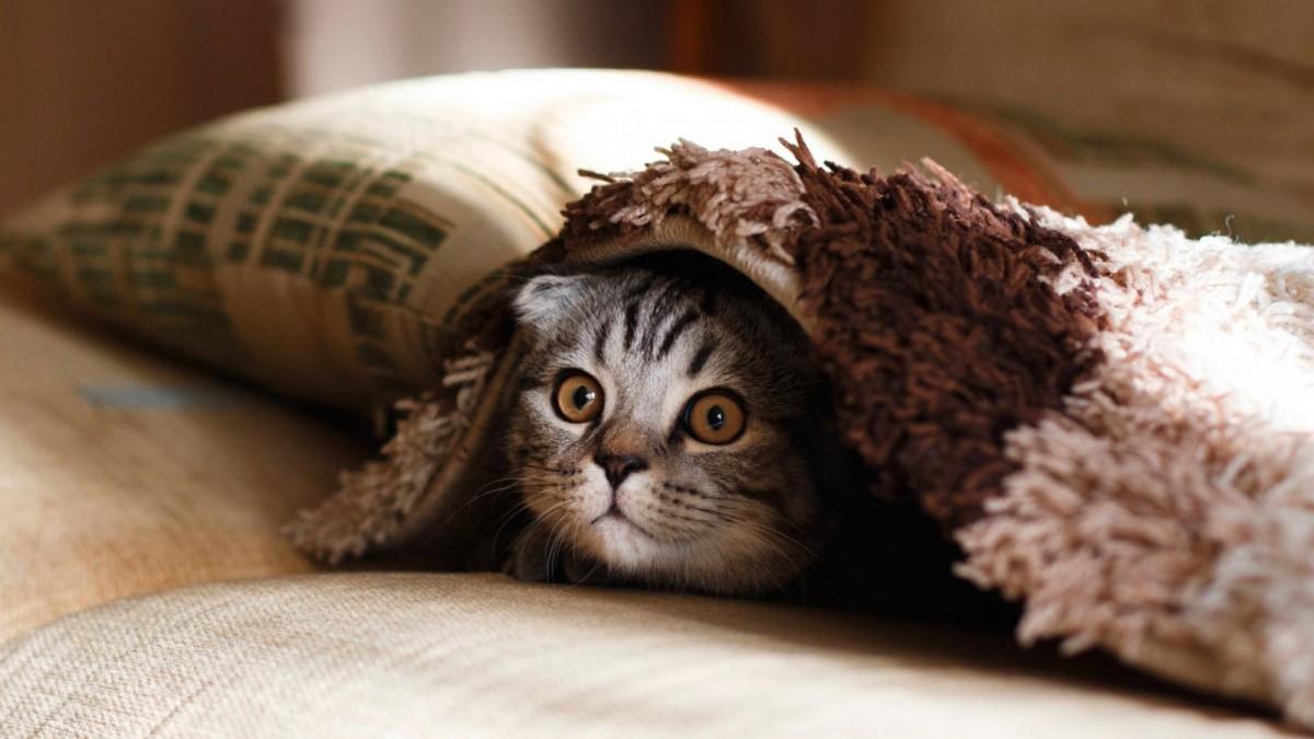 No todos los gatos pueden servir para la gatoterapia.