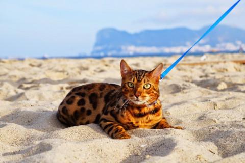 Gato en la playa