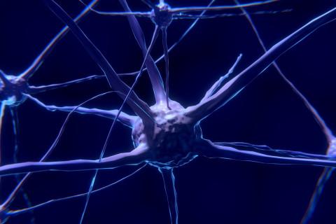 Partes de neurona