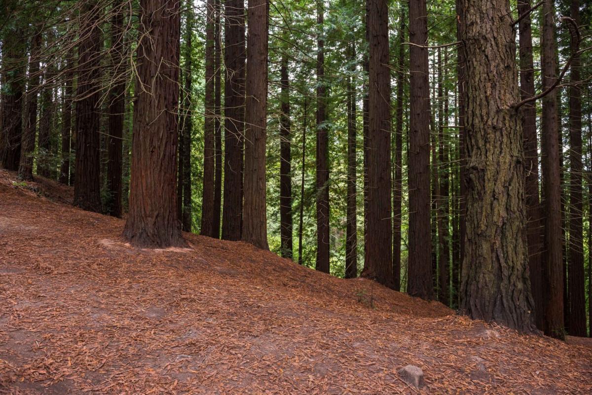 Bosque perenne