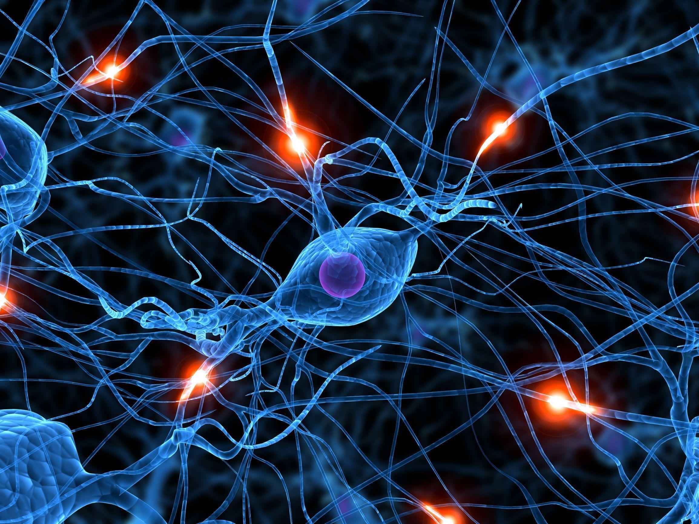 Neurona cerebro