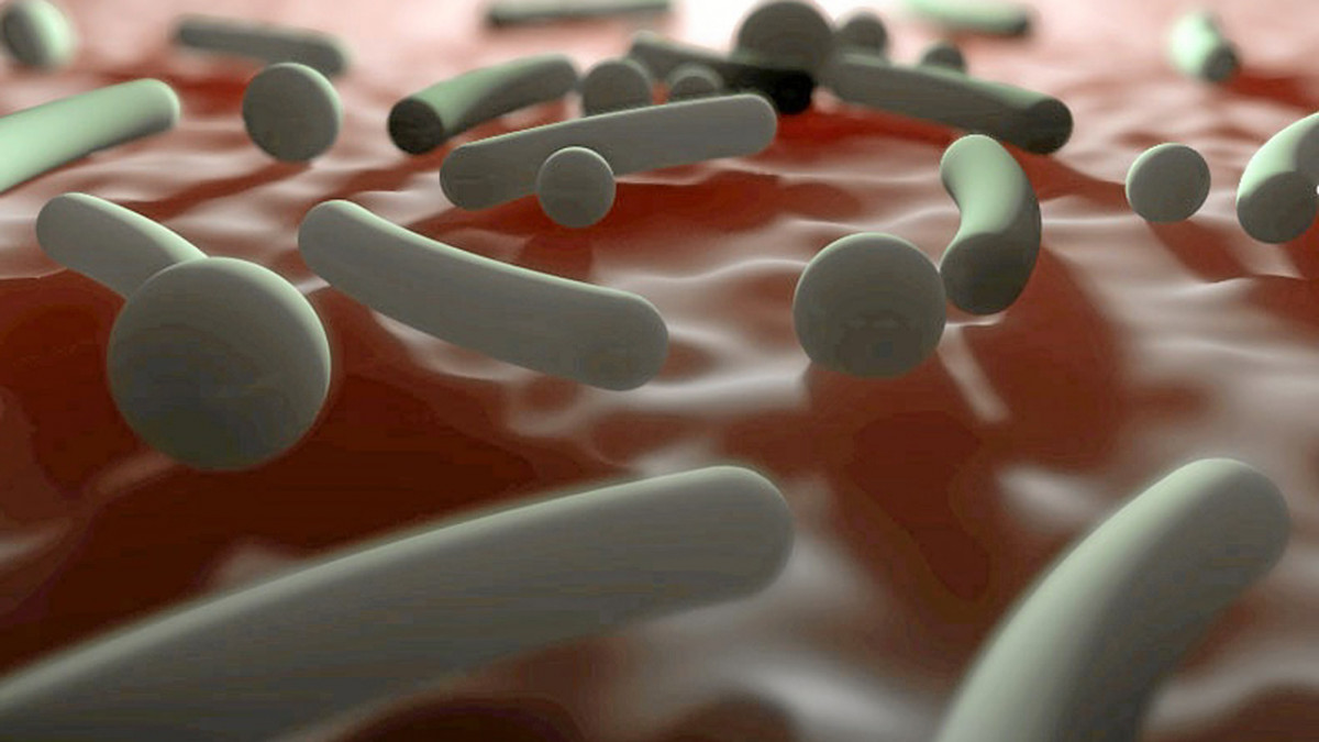 Microbiota vaginal