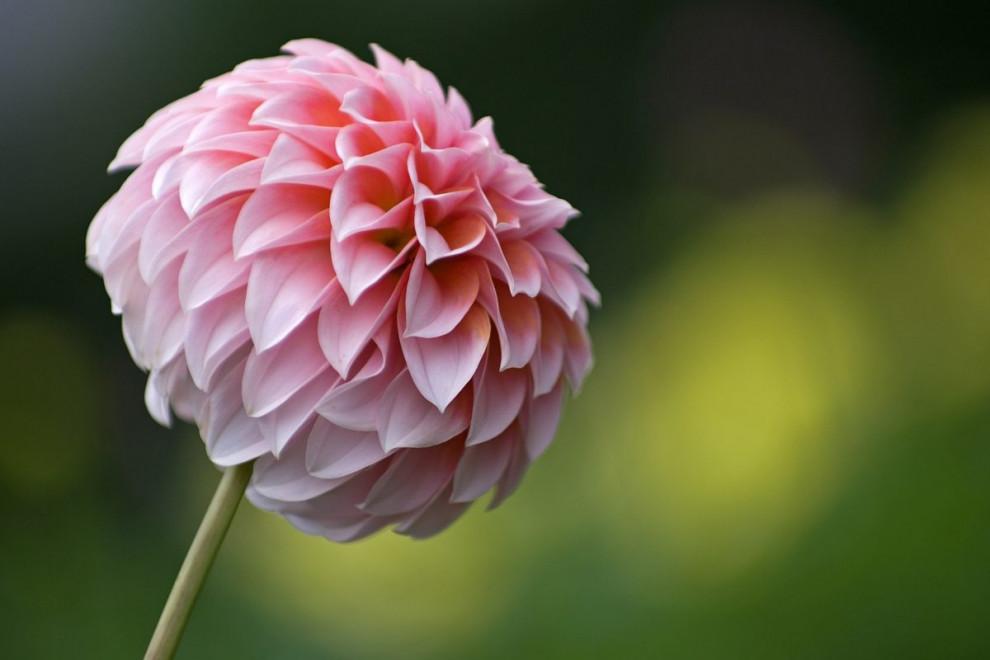 Tipos flores