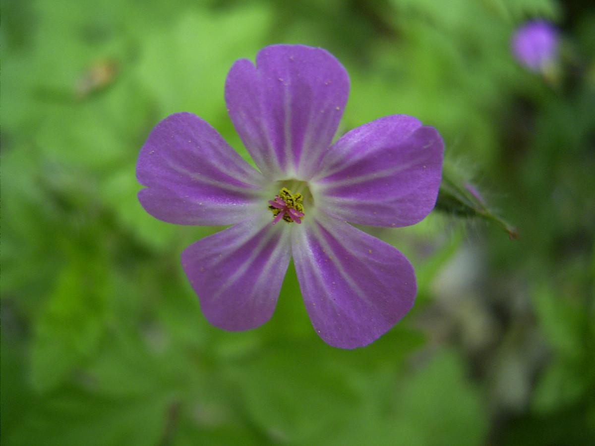 Flor simetría radial