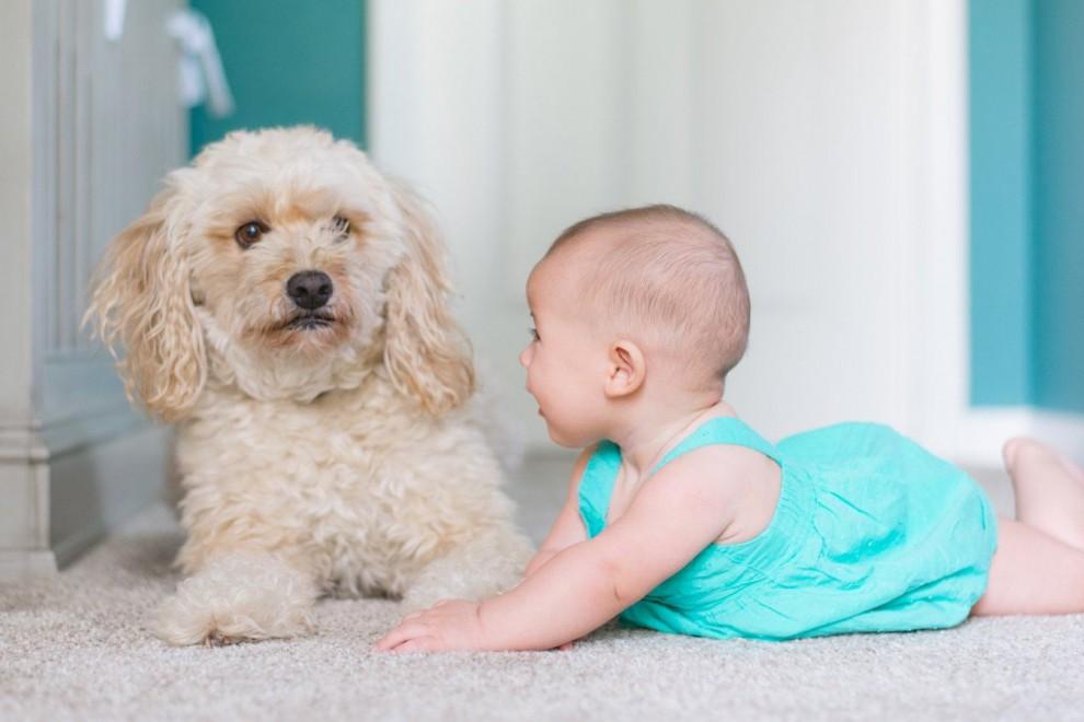 Tener un perro como mascota nos aporta muchos beneficios saludables.