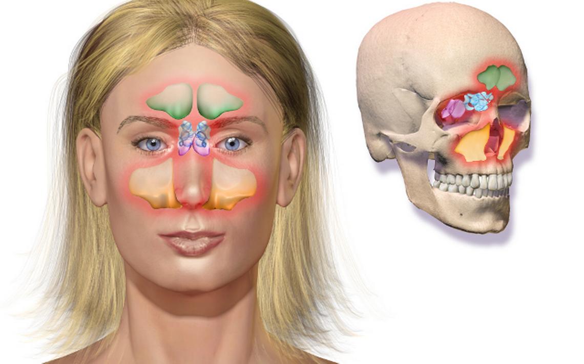 Mucosa nariz