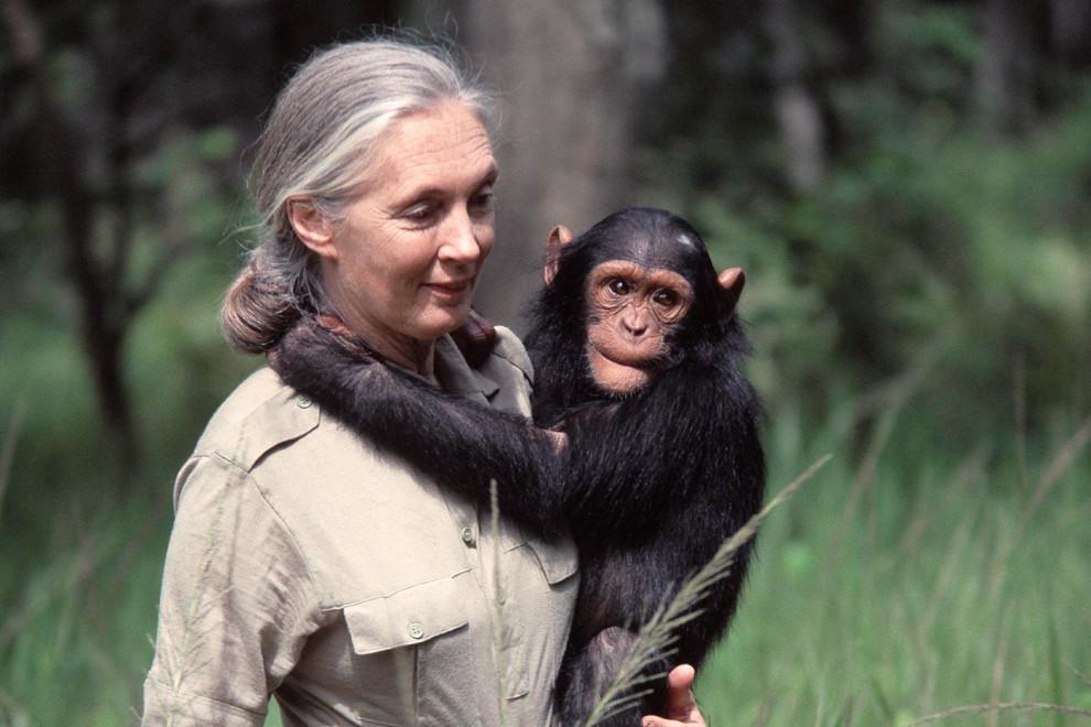 Frases Jane Goodall