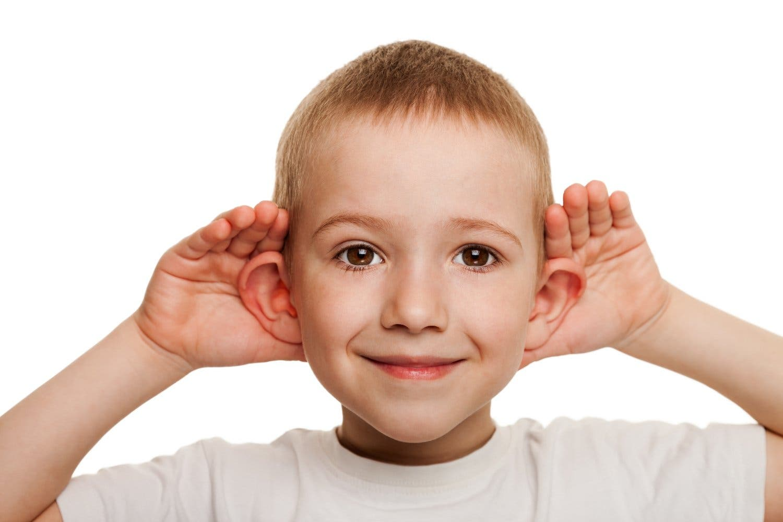 Musculatura orejas
