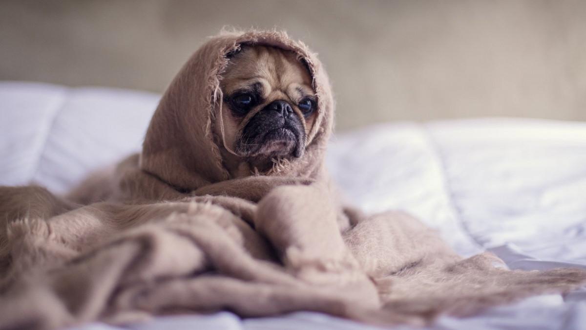 Un estudio afirma que el tercer lunes de Enero es el día más triste del año.